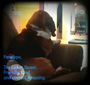 Penelope, the Wonderful Basset Hound by Earth-Girl-42