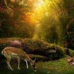 Deer manip by luminaret