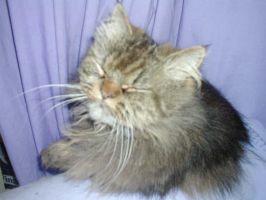 2005 Picture, My Cat Scampi by RedDevilDazzy2007