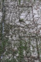 vines wall stock by marlene-stock