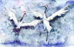 Red-crowned Cranes - Dance by Carcaneloce