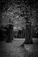 Trees 1 by pillendrehr