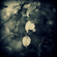 Mono Autumn by lostknightkg