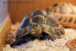 Turtle face by BazarDeLaNature
