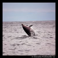 Dolphin by TVD-Photography