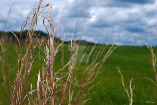 weeds in the breeze by nadineelc