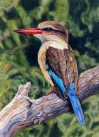 Brownhooded Kingfisher by WillemSvdMerwe