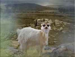 The  Cashmerkat of Dartmoor by 3punkins