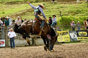 Bucking Bronco by Applemac12
