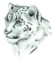 Snow Leopard by Slifer