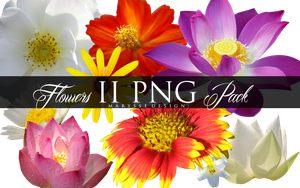 Flowers II PNG Pack by Marysse93