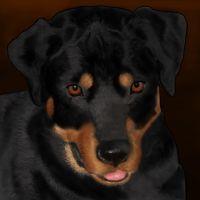 Rottweiler by FindMeAWayOut