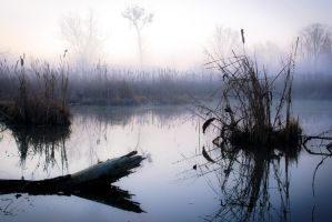 Swamp but i like it by GalagoDeCodi