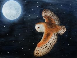 Barn owl at night by Thunderi