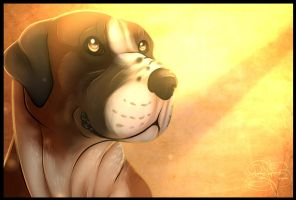 B-Day Gift: .: Shine on Me :. by SillyTheWolf