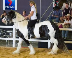 STOCK - 2014 Total Equine Expo-54 by fillyrox