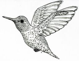 Hummingbird Lineart by M-Everham