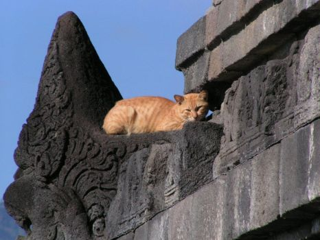 Temple cat by salimma
