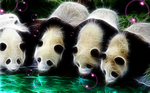 Curious Pandas by wazzy88