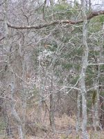 Wooded Trees1 by effing-stock