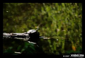 Turtle turtle by PhotographybyVictor
