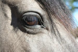Horse Eye by DrowningInBeauty