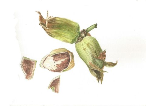 Cobnut by alter-ipse-amicus