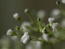 Soft Whiteness by Photopathica