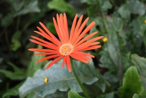 Flower 2664 by fa-stock