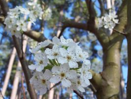 White Flowers by canabalisticmonkey