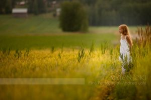 Wheat in Klaukkala by Aixchel