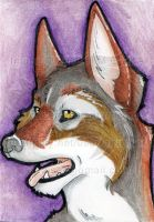ATC: Coyote 2013 by AirRaiser
