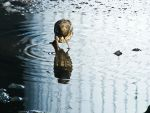 sparrow in water reflexion by rockmylife