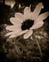 Yellow Flower No Color by livimason434