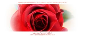 Roses Art by RazielMB-PhotoArt