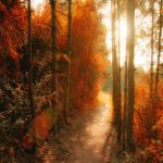 path to the shine by ildiko-neer