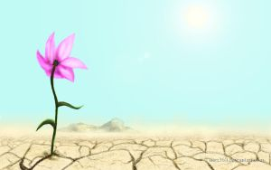 Flower in a Desert by Tsitra360
