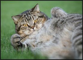 Fat Cat, Yes? by Damon-Jager