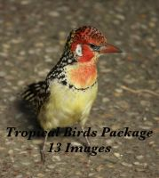tropical birds package by bookscorpion
