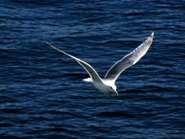 Feathers and the Sea 69206 by Flinde