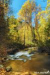 Gold Leaves to Gold Water by mjohanson