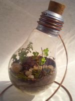 Light Bulb Terrarium 29 04 11 by Kosmu