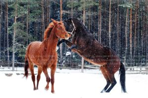 Snow hoof fight by amisiux