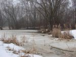 Winter Swamp Background 1 by FantasyStock