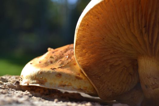 Fantastic Fungus and where I found it by Life-Flux