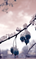 Blue Snowberries by Fantasy-luver
