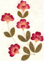 Pressed Flowers and Leaves by Enchantedgal-Stock