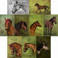 postcards-horses by paula2206