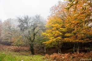 Autumn in Nebrodi mountains.22 by rebelblues