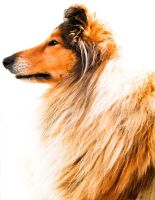 what makes a Lassie by hermio